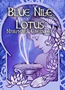 Blue Nile Lotus - Nymphaea Caerulea  - .5oz
